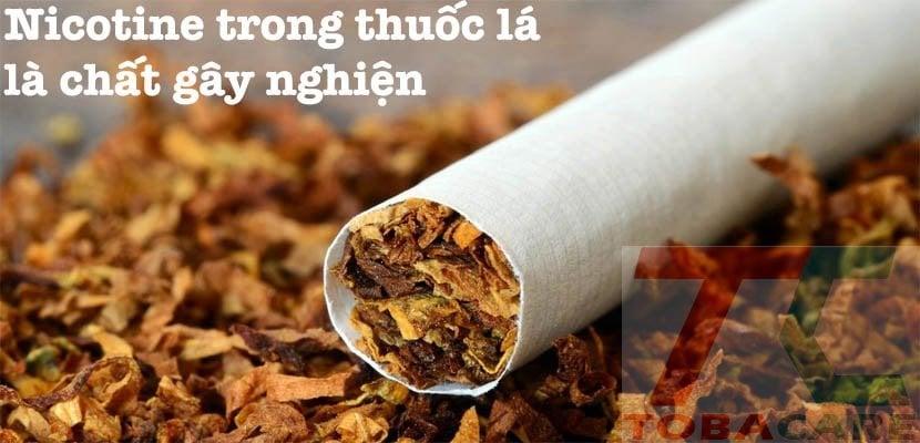 Nicotine trong thuốc lá