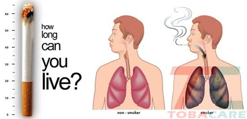 Số người chết vì thuốc lá