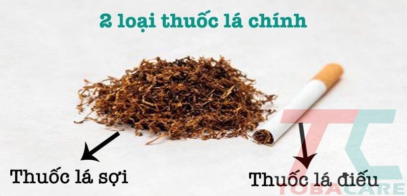 thuốc lá là gì? phân loại thuốc lá