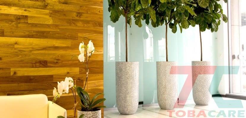 Trồng nhiều cây xanh trong nhà