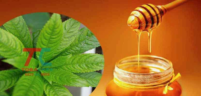 Công dụng của mật ong có giúp bạn bỏ thuốc lá