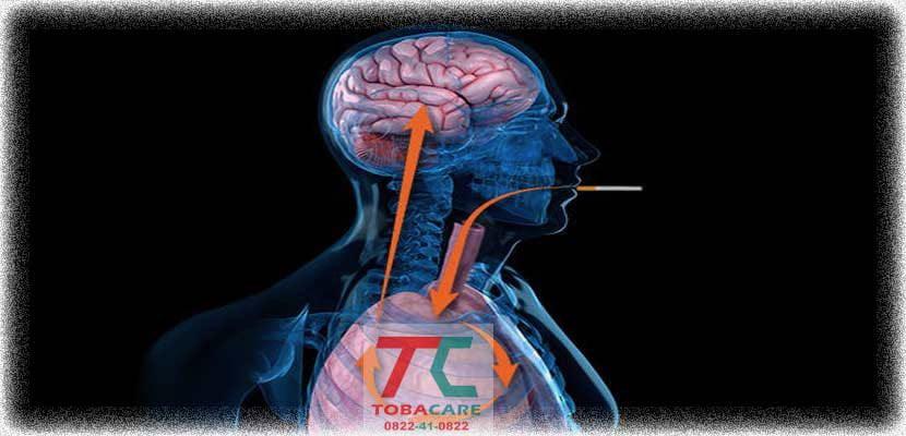 Nicotine trong thuốc lá ảnh hưởng lớn đến não