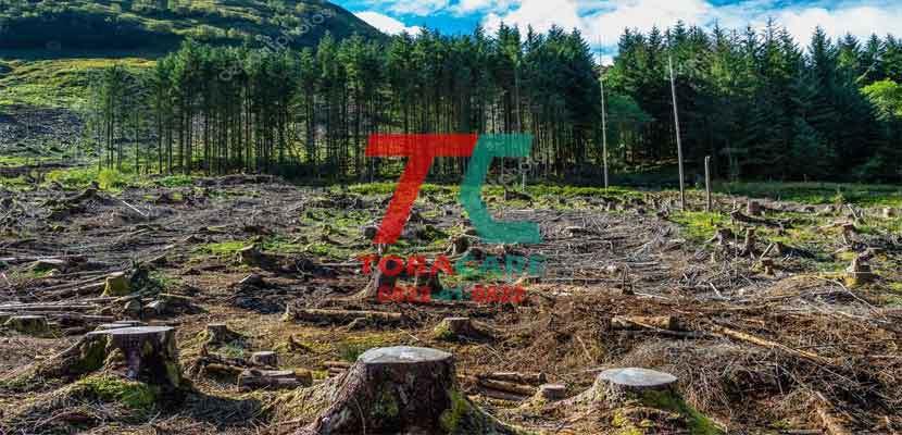 Sản xuất thuốc lá, khai phá rừng là nguyên nhân gây ô nhiễm môi trường