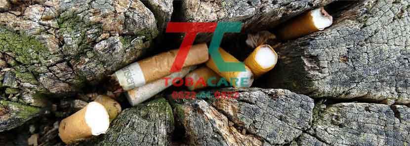 Tác hại của thuốc lá đối với môi trường như thế nào