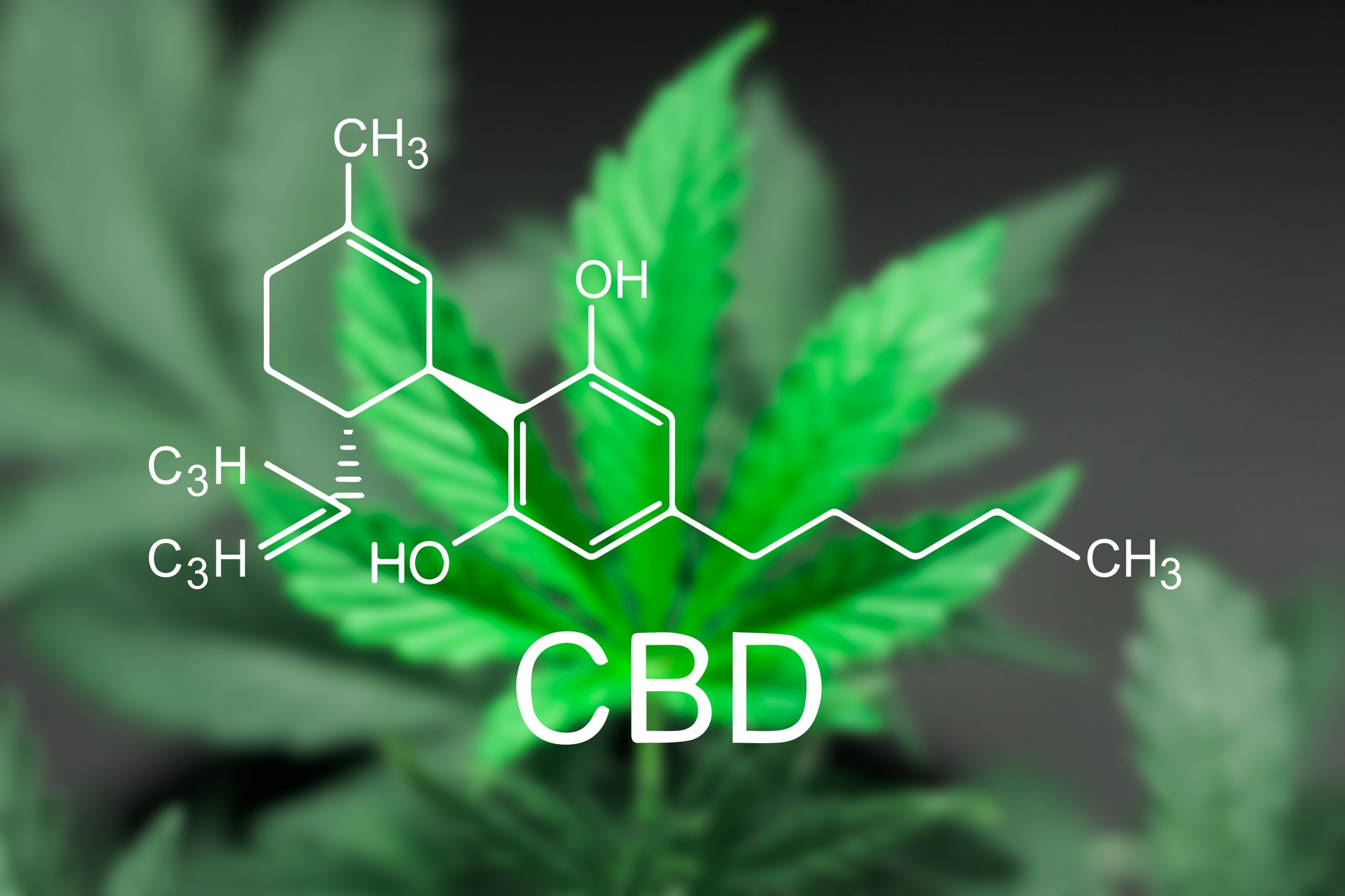 How long does CBD stay in your system 2 scaled