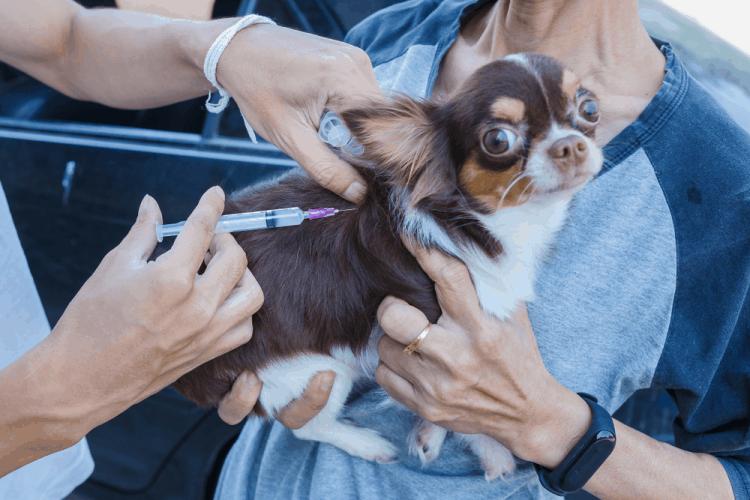 Lời khuyên bảo vệ bạn và thú cưng khỏi bệnh dại
