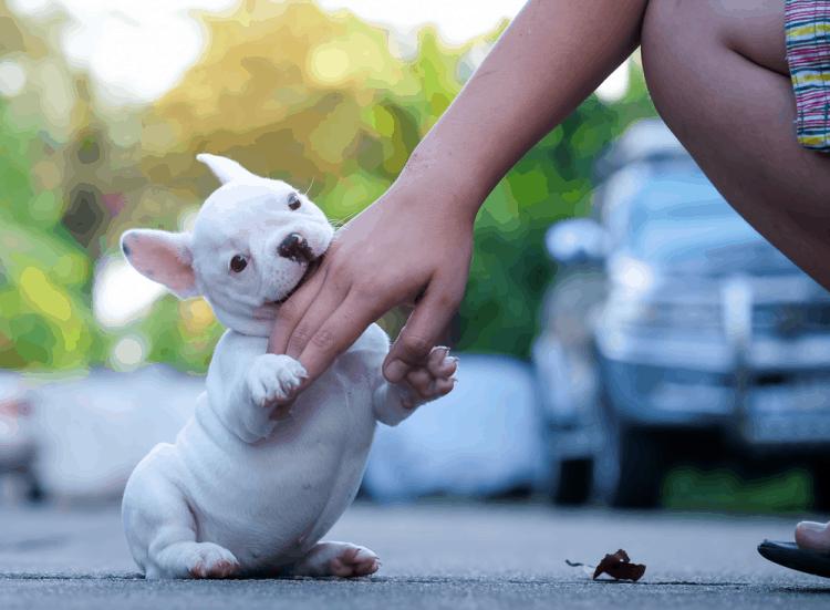 Cách sơ cứu khi bị chó dại cắn: Làm gì để tránh lây bệnh dại?