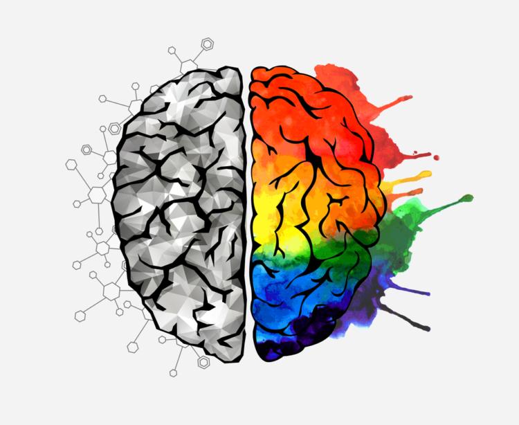 bộ não con người