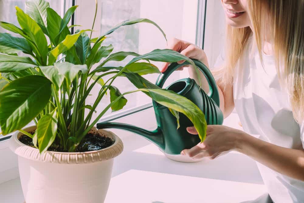 14 loại cây trồng trong nhà được chứng minh tốt cho sức khỏe