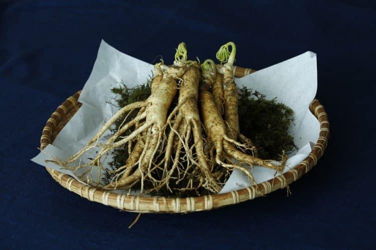 Dùng thảo dược hỗ trợ miễn dịch