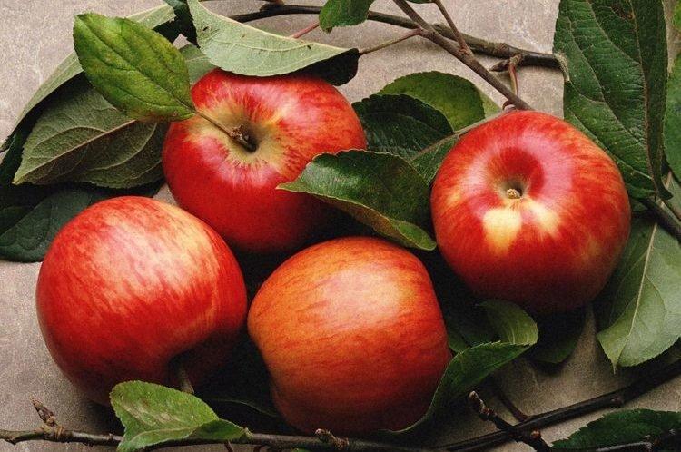 hỗ trợ trí nhớ với táo