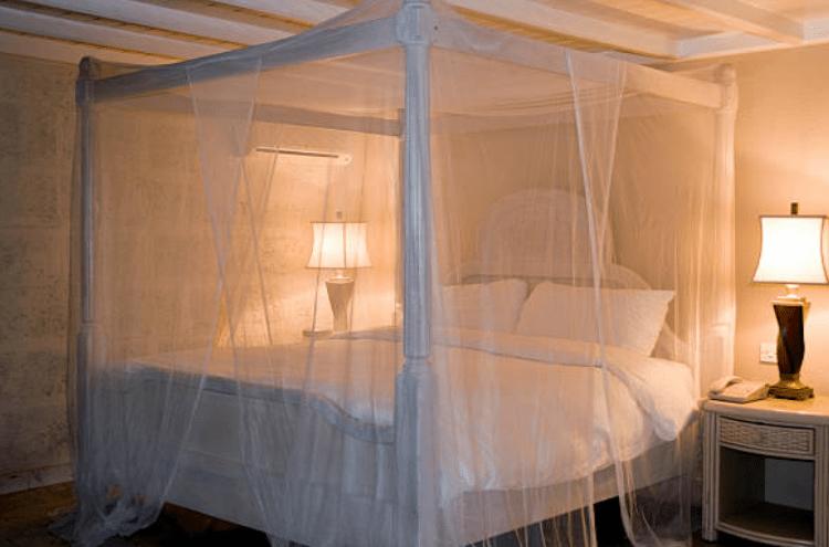 Phòng ngừa kiến ba khoang cắn vào mùa mưa