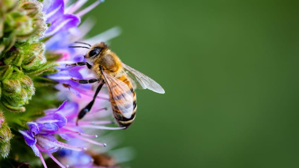 Ong đốt bôi gì cho bớt sưng nhức? Khi nào cần cấp cứu ngay?
