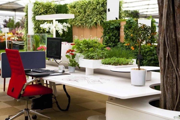 không gian cây xanh giúp rèn luyện sự tập trung