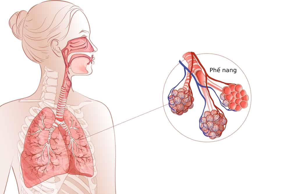 tìm hiểu cấu tạo hệ hô hấp để có các biện pháp bảo vệ hệ hô hấp